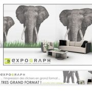 Expograph Stickers Elephants